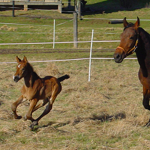 Meine Pferde